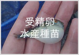 受精卵・水産種苗